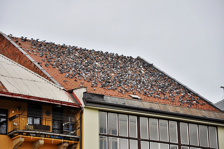 A2B Pest Control are able to install spikes to deter birds from roofs in Parsons Green.