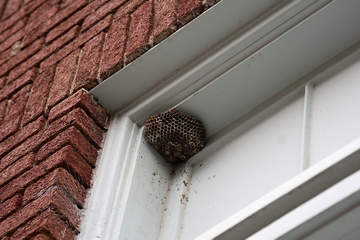 We provide a wasp nest removal service for domestic and commercial properties in Parsons Green.